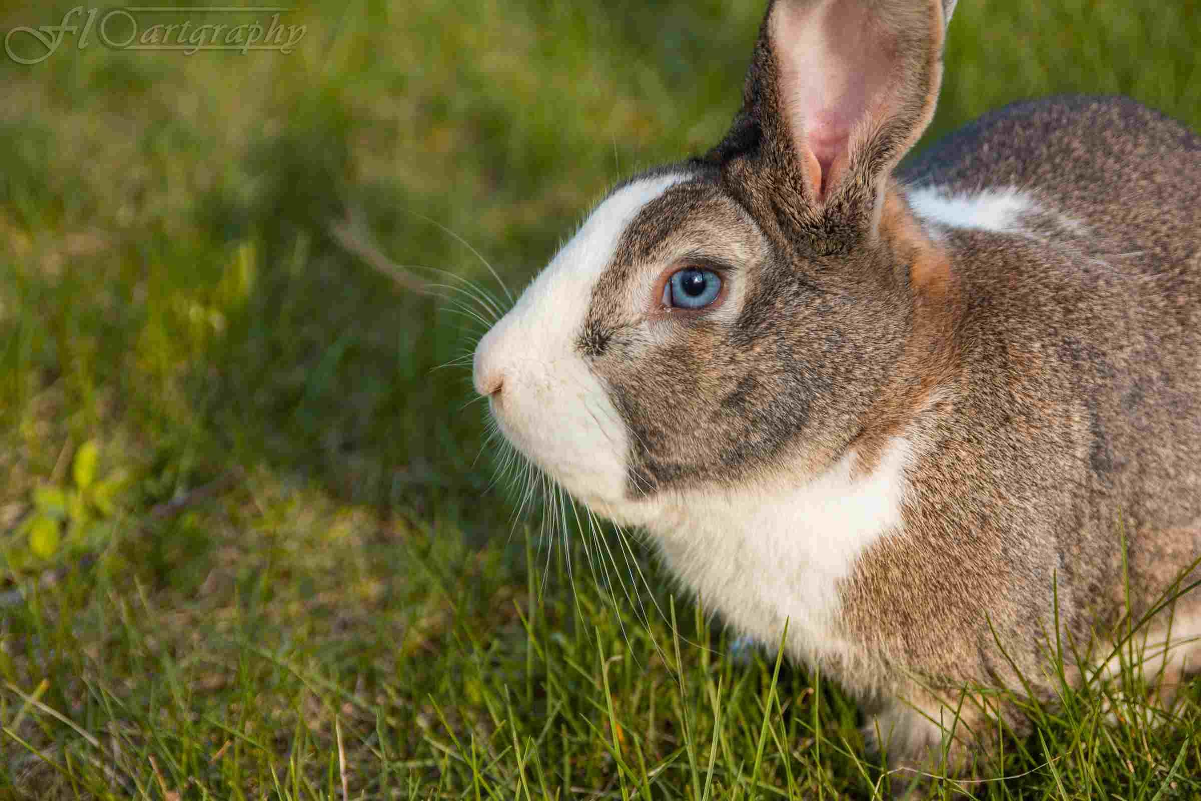 Foto Bunny by Floartgraphy